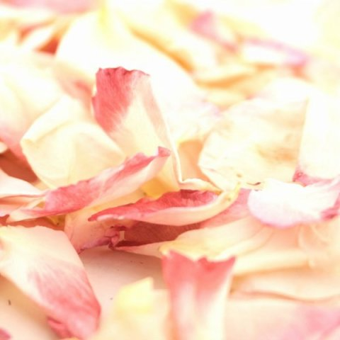 Freeze-dried Rose Petal Confetti - Blushing Bride - The Dried Petal Company