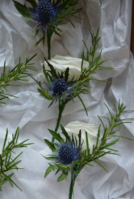 Thistle buttonholes - Bottom Of The Garden Flowers