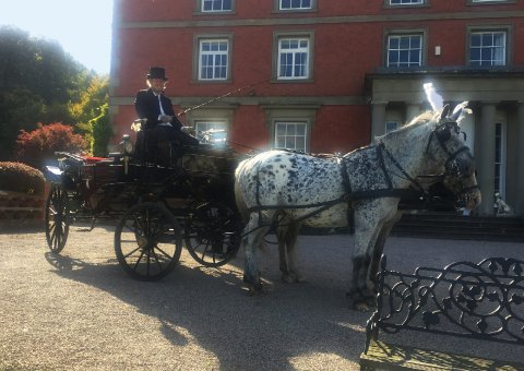 Wedding Horse and Carriage from The Cavalry of Heroes - The Cavalry of Heroes - Horses and Carriages